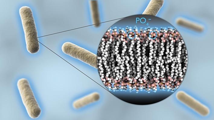 Transforming Bacteria