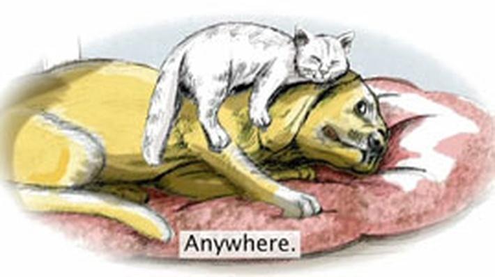 Poem: Cats