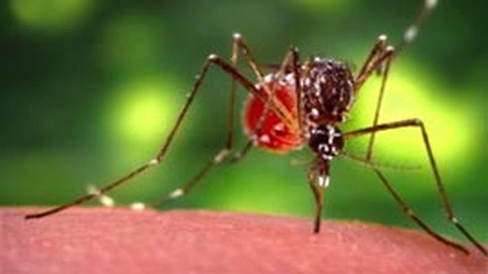 Dengue Virus Invades a Cell