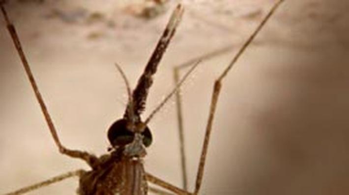 Eradicating Malaria with DDT