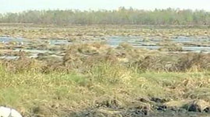 Hurricane Katrina: Wetland Destruction