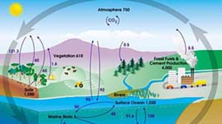 Carbon Cycle Diagram