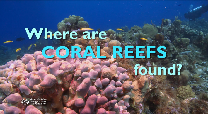 Where are Coral Reefs Found?