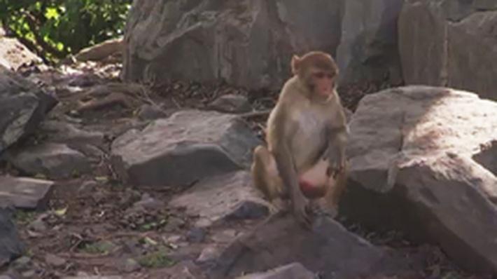 Monkey See, Monkey Take