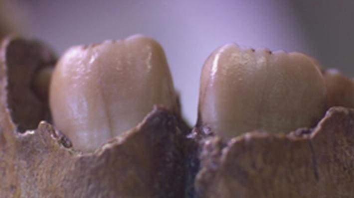 The Human Spark | What Teeth Can Tell