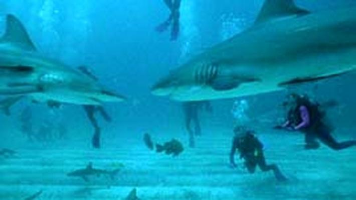 Nature | The Secret World of Sharks and Rays: Sharks in Our Future