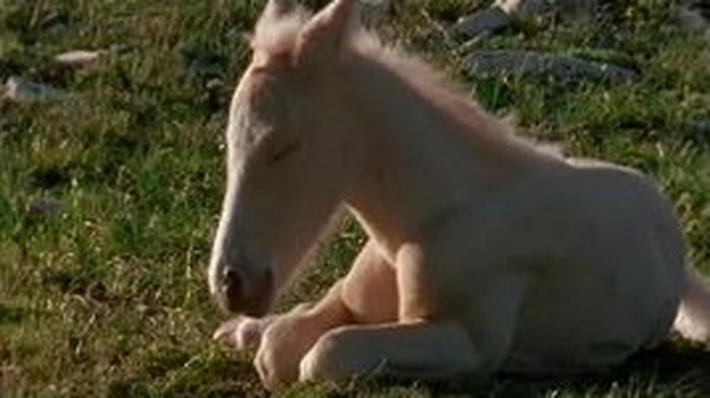 Cloud the Horse: Foal