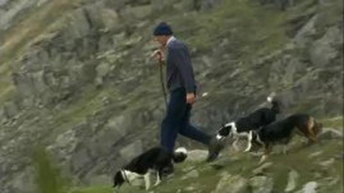 The Herding Dogs of the United Kingdom