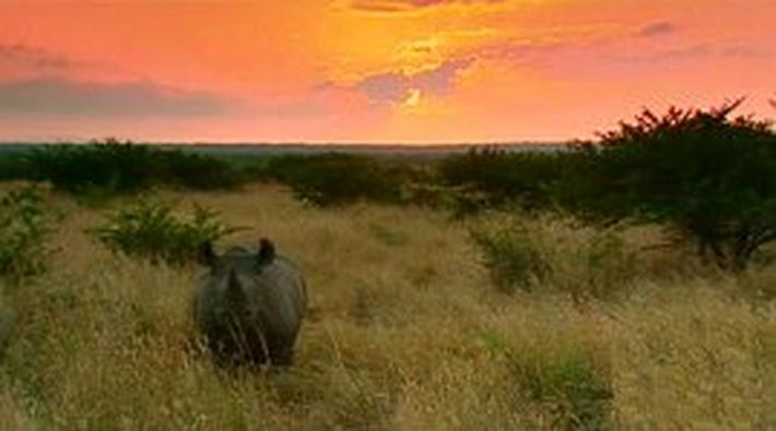 Rhinoceros Capture