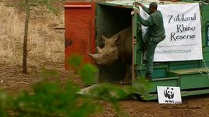 Rhinoceros Release