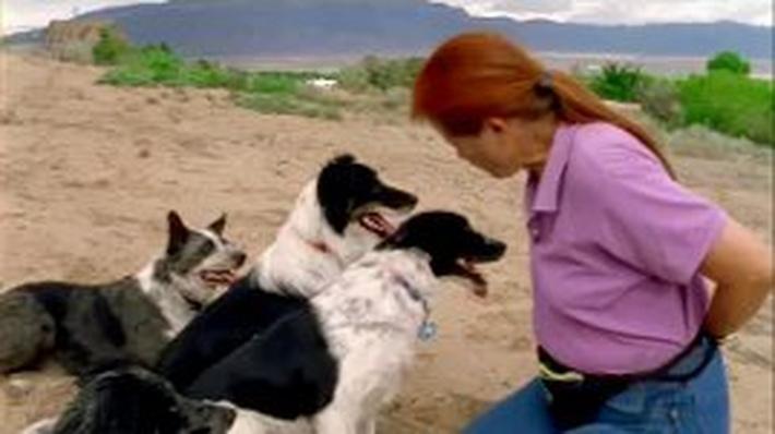 Animal Shelter Photographer