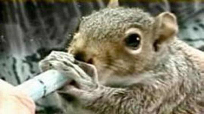 Squirrel Rehabilitation | WILD TV