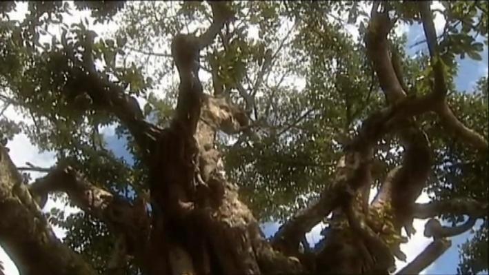 Kenya and Wangari Maathai | Taking Root Film Module
