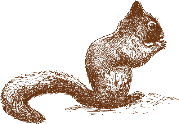 Little Squirrel | Clipart