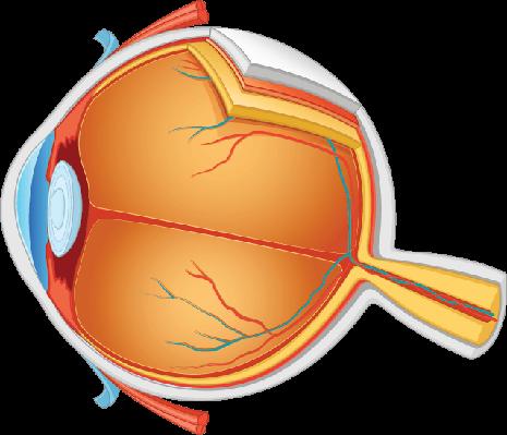 Eye Anatomy  Illustration | Clipart