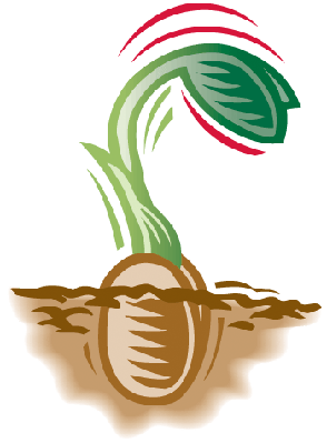 Seed Sprouting | Clipart