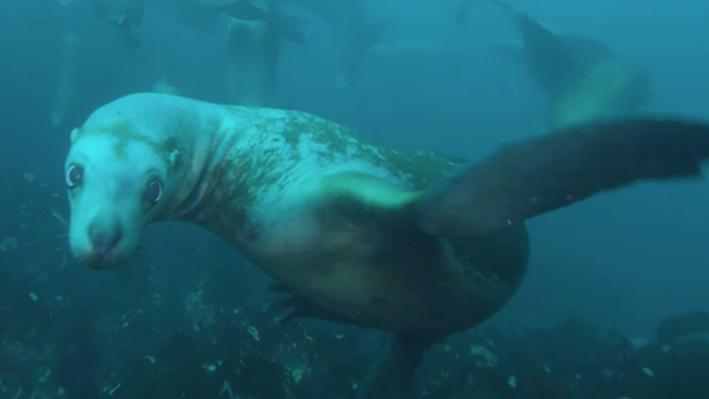 Sea Lions | NOAA