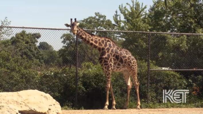 Zoo Safari | Everyday Science