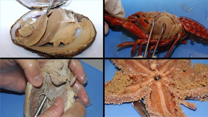 Crayfish Dissection | Dissection Videos for Classroom Use ...
