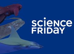 Science Friday: Sea Creatures