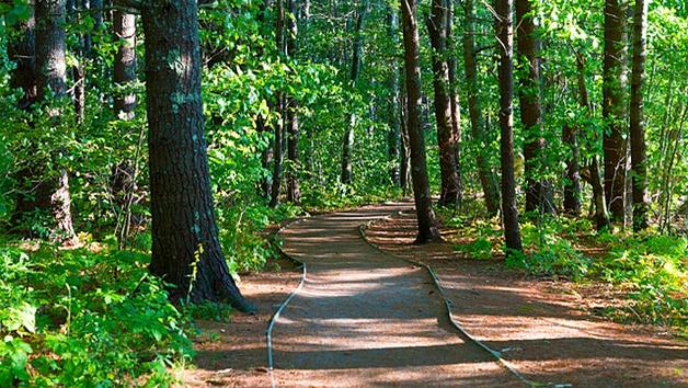 Rachel Carson's Silent Spring