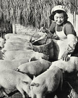 Chinese pig farm, Shanghai,1959 (b/w photo)