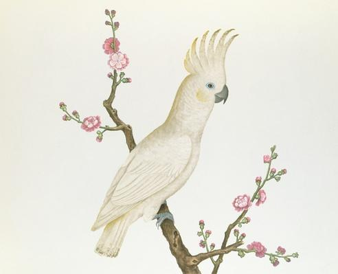 Lesser Lemon Crested Cockatoo, perched on a sprig of flowering Japonica, Ch'ien-lung period (1736-96) (colour on paper)