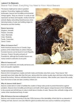 Beaver Fact Sheet: Everything You Need to Know About Beavers