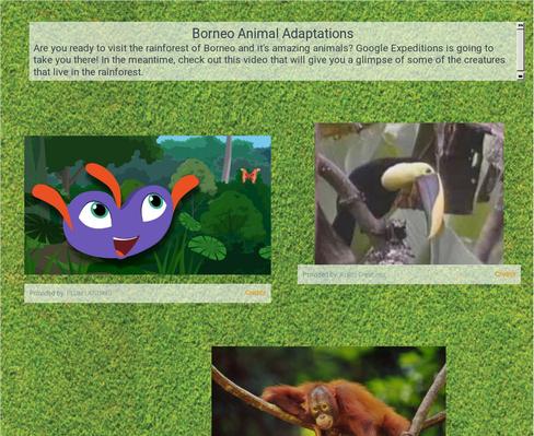 Borneo Animal Adaptions