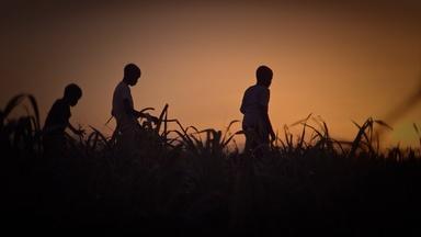Trailer | Stateless