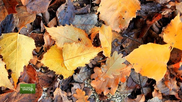 You Bet Your Garden: Ep. 76 The Rule of Fallen Leaves