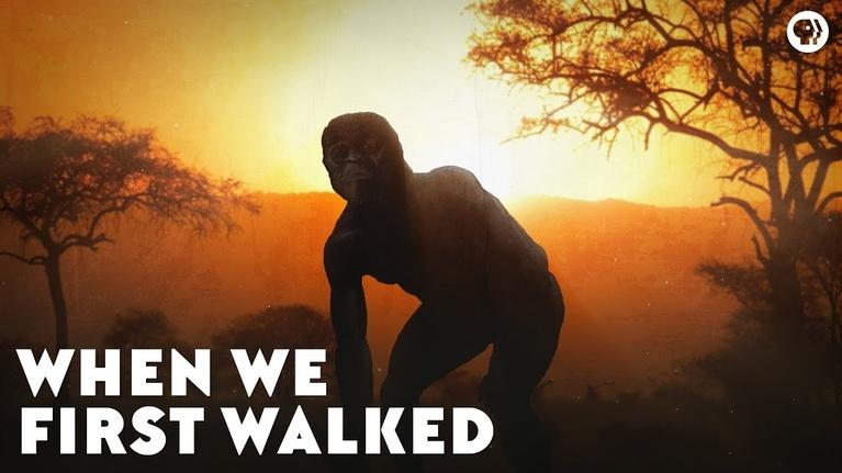 Eons: When We First Walked