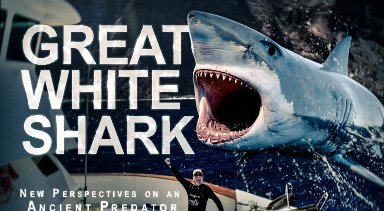 EXPLORE San Diego: Great White Shark: New Perspectives On An Ancient Predator