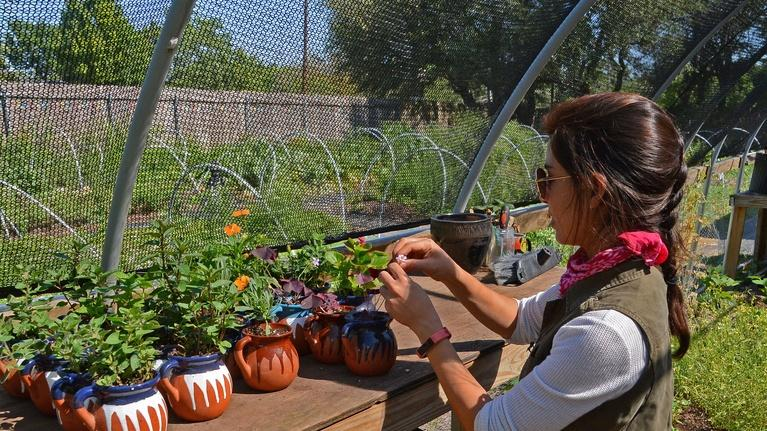 Exceptionnel Central Texas Gardener: Lessons From Urban Farmers To Grow In Heat