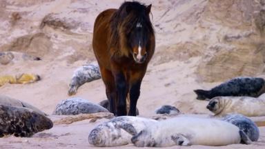How Seals Help Wild Horses