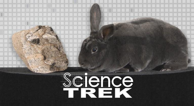 Science Trek: Kingdoms of Life: Kingdoms of Life explained, sort of