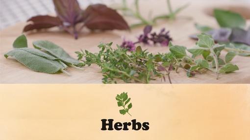 Let's Grow Stuff : Herbs