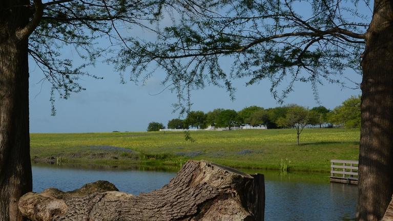 Central Texas Gardener: Plant Pathogen Primer