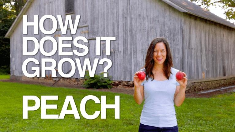 How Does It Grow: Peaches