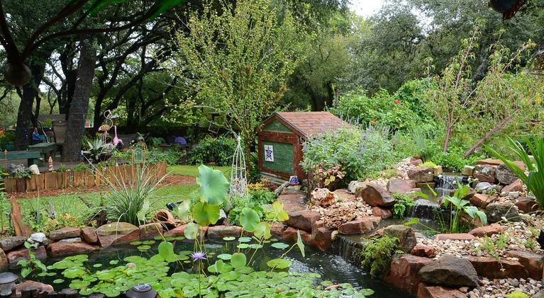 Central Texas Gardener: Pond & Bog Plants with Pizazz!
