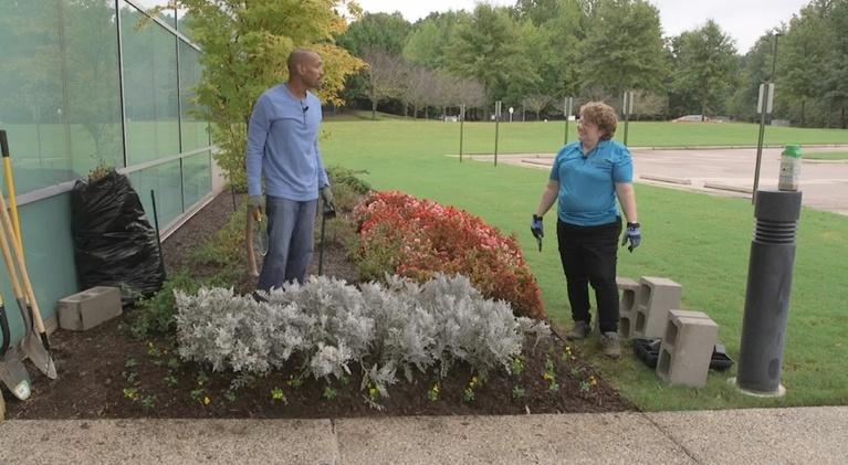 The Family Plot: Planting Fall Flowers & Garlic