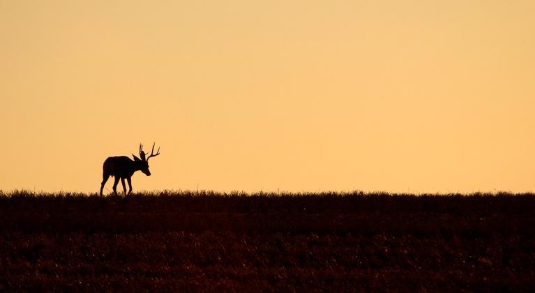 South Dakota Focus: Deer hunting license drawing structure