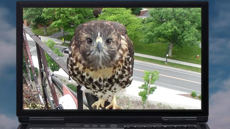 Vegas PBS: Join Bird Cams Lab