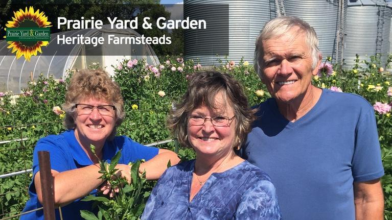 Prairie Yard & Garden: Dahlias and the Cutting Garden
