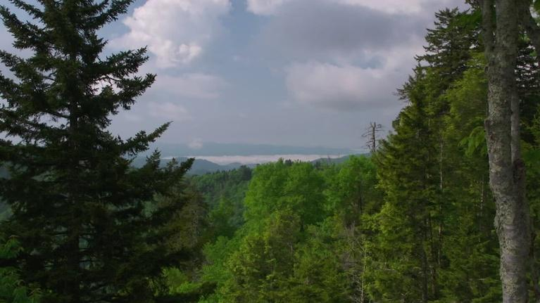 WEDU Quest: 403: Great Smokey Mountains Air Quality