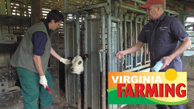Virginia Farming: Virginia Farming: Veterinarians in the Field