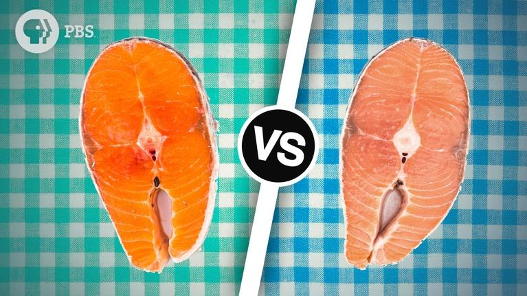 Serving Up Science: Wild Salmon or Farmed Salmon? Which is the Best Choice?