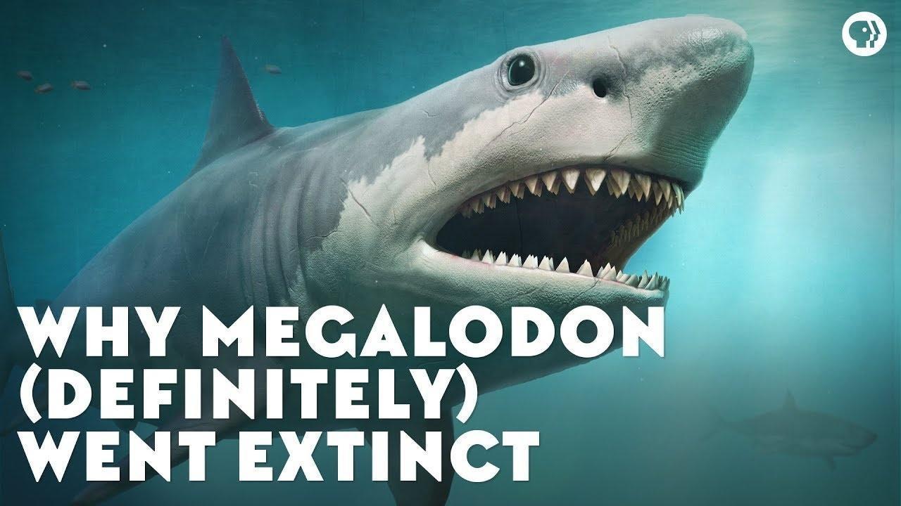 Why Megalodon (Definitely) Went Extinct | Season 2 Episode 7 | Eons