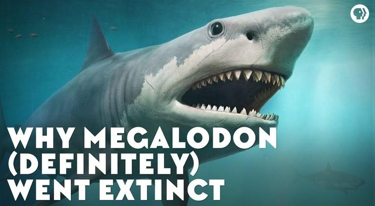 Eons: Why Megalodon (Definitely) Went Extinct
