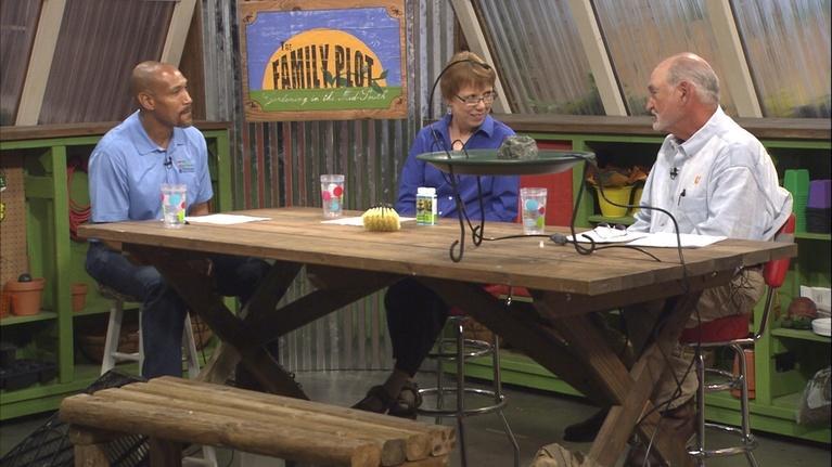 The Family Plot: Bird Baths & Spraying Tomatoes